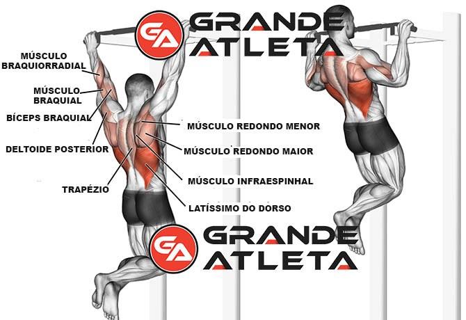 músculos solicitados trabalhados barra fixa