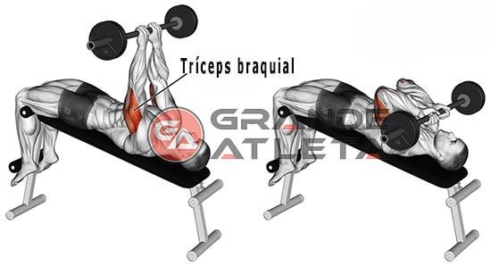 triceps testa