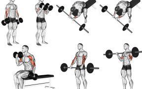 melhores exercícios para bíceps e antebraços