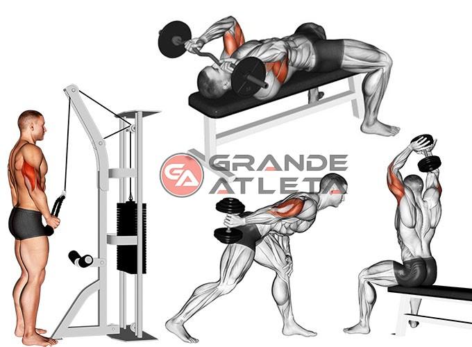 exercícios para triceps