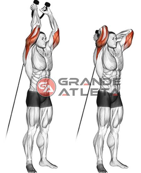 triceps francês corda polia