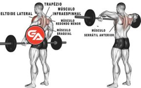 remada alta execução e músculos