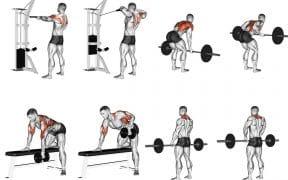 exercicios para treino de costas dorsais trapezio