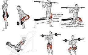 quadríceps exercícios treino